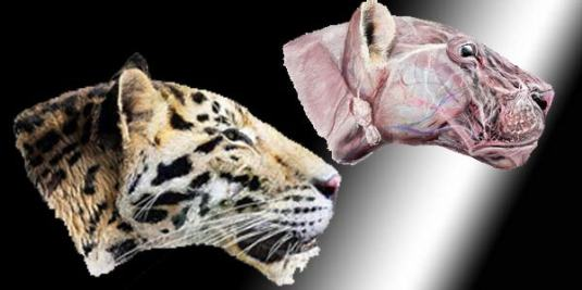 Ingin Tahu Wajah Macan dari 2,5 Juta Tahun Silam? - teknologi.inilah.com